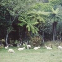 1993年のニュージーランド研究旅行 その31 西海岸へ