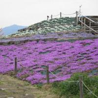 4/10(月)相模三川公園の桜(再訪)