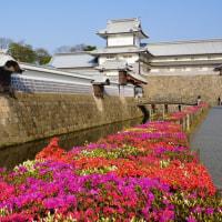 ツツジなど様々な植物(金沢城公園・兼六園)
