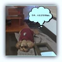 2629)小梅の・・・