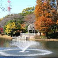 川越御伊勢塚公園の紅葉