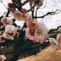 春はまだ先