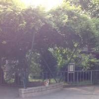 朝の公園で