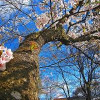 陽春再来☆豪華絢爛(日高火防祭)