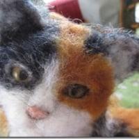 三毛猫:植毛です