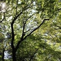 山岳点景:薫風の森