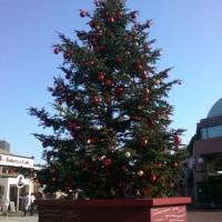 恵比寿ガーデンもクリスマス一色でつなぁ~