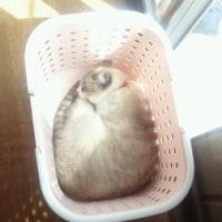 猫って狭い場所が好きね~