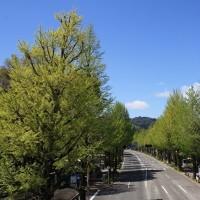 新緑の高尾 2017.4.23