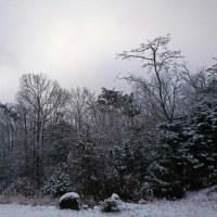 天気予報通りの雪です