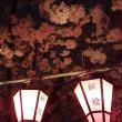 土佐稲荷神社の桜