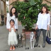 横浜からのお客様です、イタグレのレイ二ィくん・ウィペットのリタちゃん・ウィペットのレイル君です