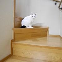 階段で~あんよがかわいい【動画】😹