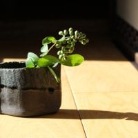 水蝋の木(イボタノキ)