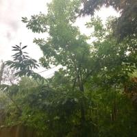 大雨と人間
