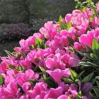 春たけなわ 花は咲き乱れる