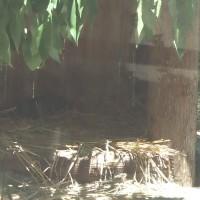 タスマニアデビルに会いに多摩動物公園に