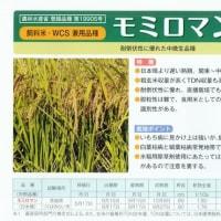 多収品種栽培(飼料用米)講習会