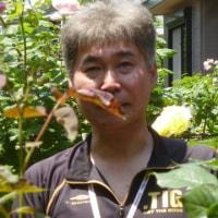 バラを究めた新倉さんの庭