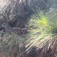 家の庭の松の木に