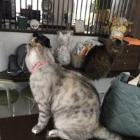 20170519の猫たちと時々犬