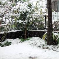 雪(TmT)ウゥゥ・・・