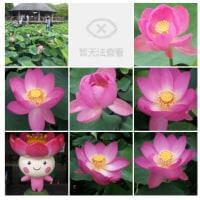 20120623千葉公園蓮
