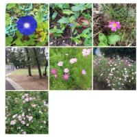 20140626幸町公園。すぐ近くの公園です。花は少ないけどのんびり出来ます。