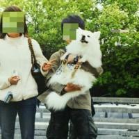 箔のウチの子12周年とオフ会デビュー噺