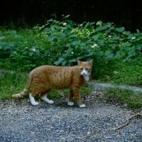最近であった猫たち MC5235-3691