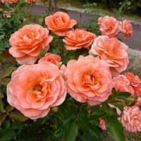 花フェスタ記念公園の「春のバラまつり」 2