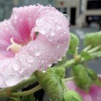 <空梅雨>、一転して <どしゃ降り> (続き)