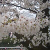 桜咲く頃やってくる、チンドンコンクール