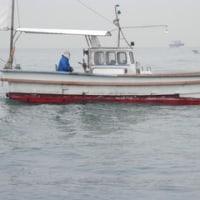 加太沖釣行とタラノメ採り