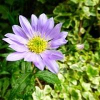 春の花と干支の酉有難うございます。