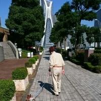 おじいちゃんと散歩