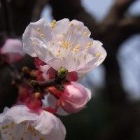 春の訪れ、