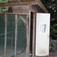 鶏開放中 高良大社 2017/05/21