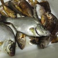 下津井の雑魚釣り