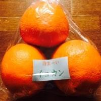 3/19(日)県北にて 花便り & 柑橘ゲットなり~~~