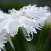 雨粒と水滴