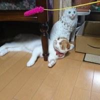 きなこちゃん!!