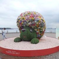 山下公園の「未来のバラ園」は必見!!