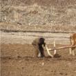 北朝鮮で2001年以来最悪の干ばつ 子供に危険=国連