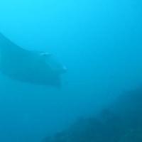 H27.1  パラオダイビング