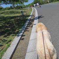 第5回ドッグマラソンin葛西臨海公園
