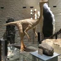 群馬 自然史博物館