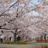 パナソニック桜広場