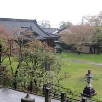 本屋親父のつぶやき 4月26日 桜から若葉の季節へ移ります。