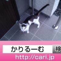 2016/09/18(16:42:40)写真 猫H